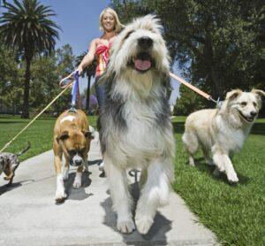 Redacción de un contrato para pasear perros - Formato de muestra